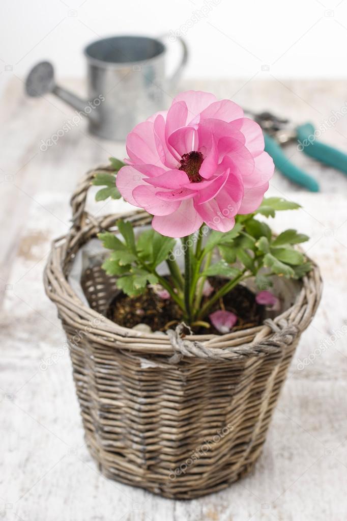 accessoire jardin rose