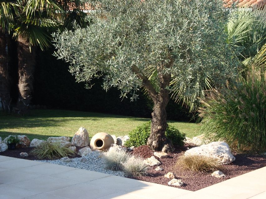 amenagement jardin avec olivier
