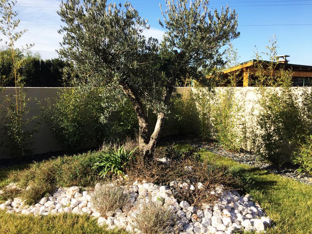 amenagement jardin avec un olivier le sp cialiste de la. Black Bedroom Furniture Sets. Home Design Ideas