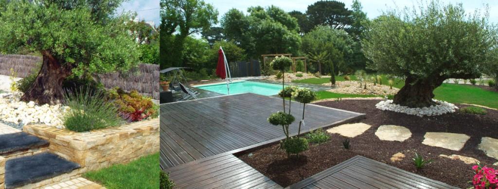 amenagement jardin avec un olivier - le spécialiste de la décoration ...