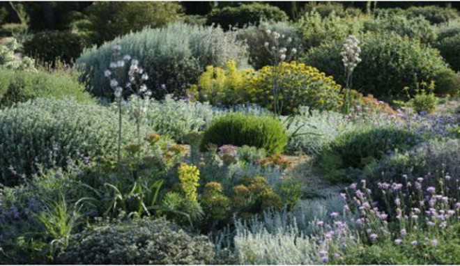 amenagement jardin garrigue