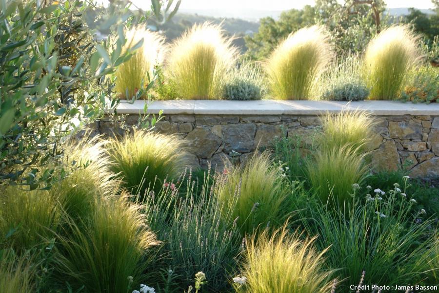 amenagement jardin graminees - le spécialiste de la décoration extérieur