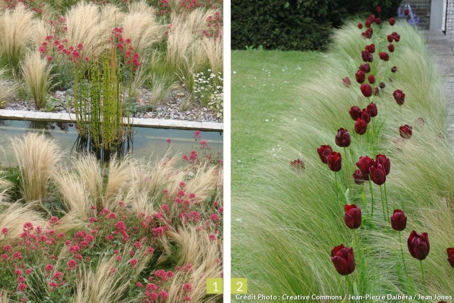 Amenagement Jardin Graminees Le Specialiste De La Decoration Exterieur