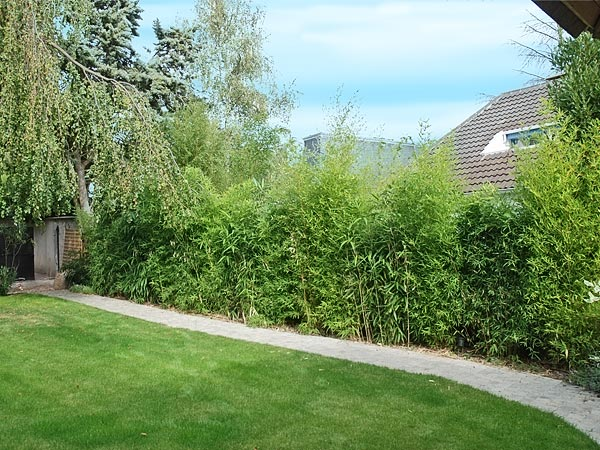 amenagement jardin haie