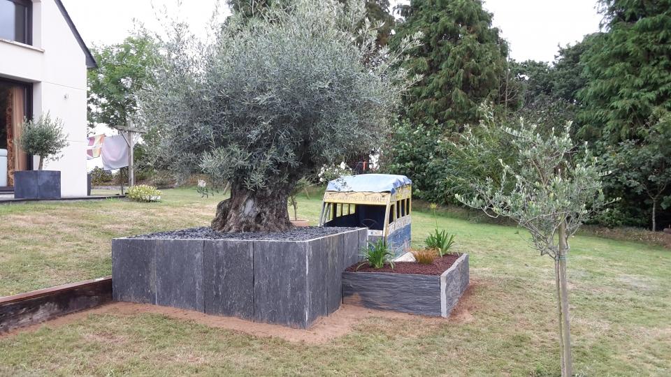 amenagement jardin olivier - le spécialiste de la décoration extérieur