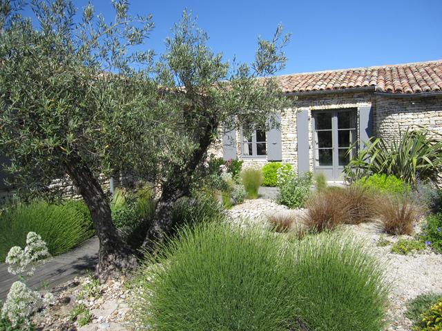 amenagement jardin olivier
