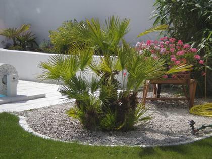 decoration terrasse avec palmier