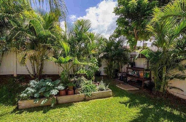decoration terrasse palmier