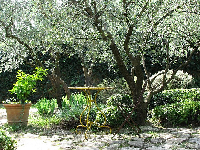 idee jardin arbre