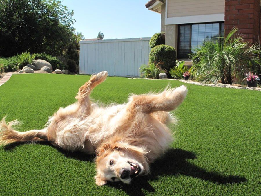 idee jardin avec un chien