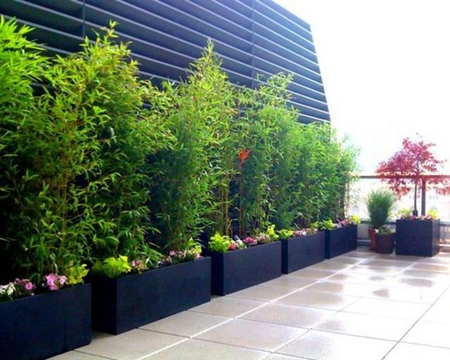 idee jardin bambou - le spécialiste de la décoration extérieur