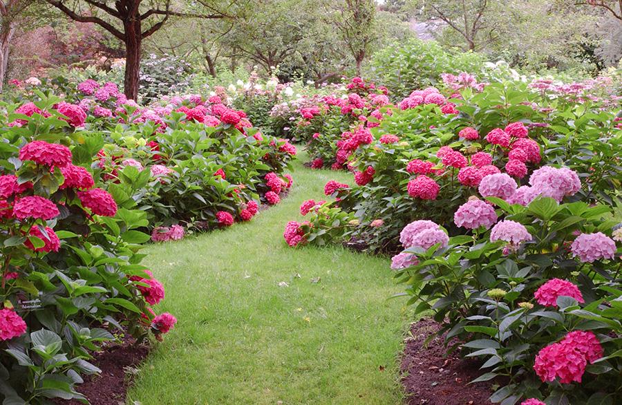 Emejing Idee Jardin Romantique Images - House Design - marcomilone.com