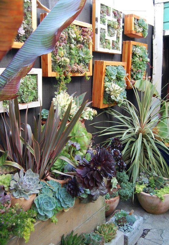 idee jardin plantes grasses