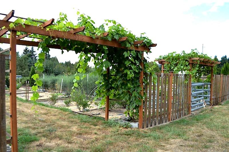 idee jardin vigne le sp cialiste de la d coration ext rieur. Black Bedroom Furniture Sets. Home Design Ideas